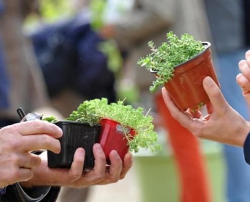 Photo illustrant un troc aux plantes.