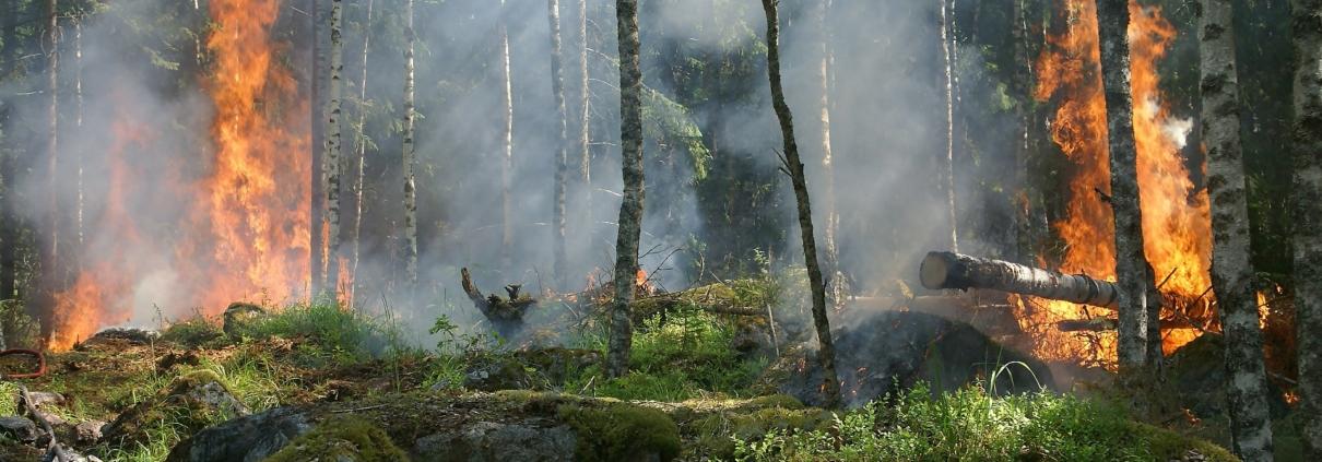 Prévention contre les feux de forêt et aires naturelles.
