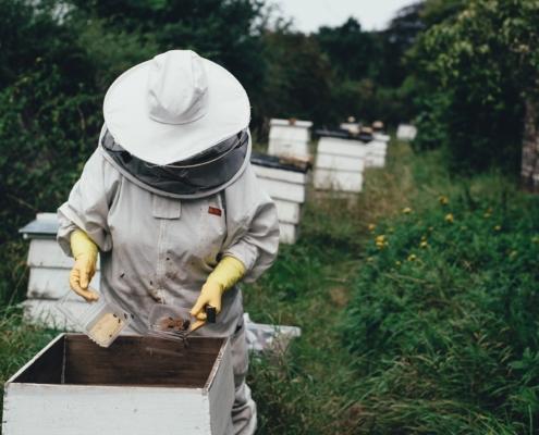 Déclaration des ruchers 2021.